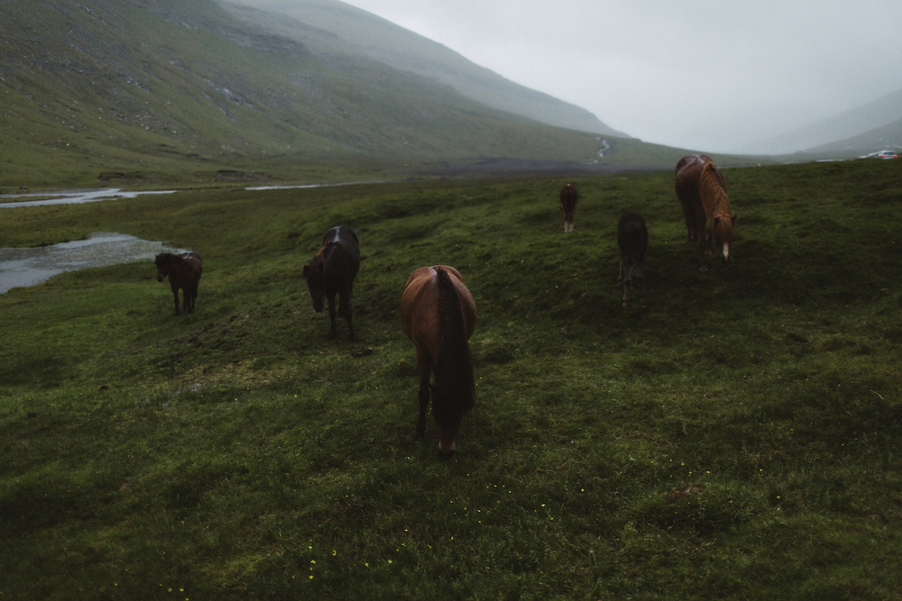 Faroe Islands Iceland Rachel Gulotta Photography-88.jpg