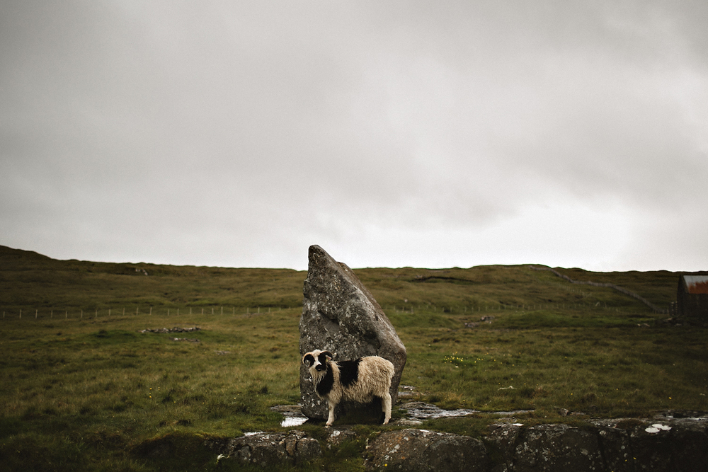 Faroe Islands Iceland Rachel Gulotta Photography-121.jpg