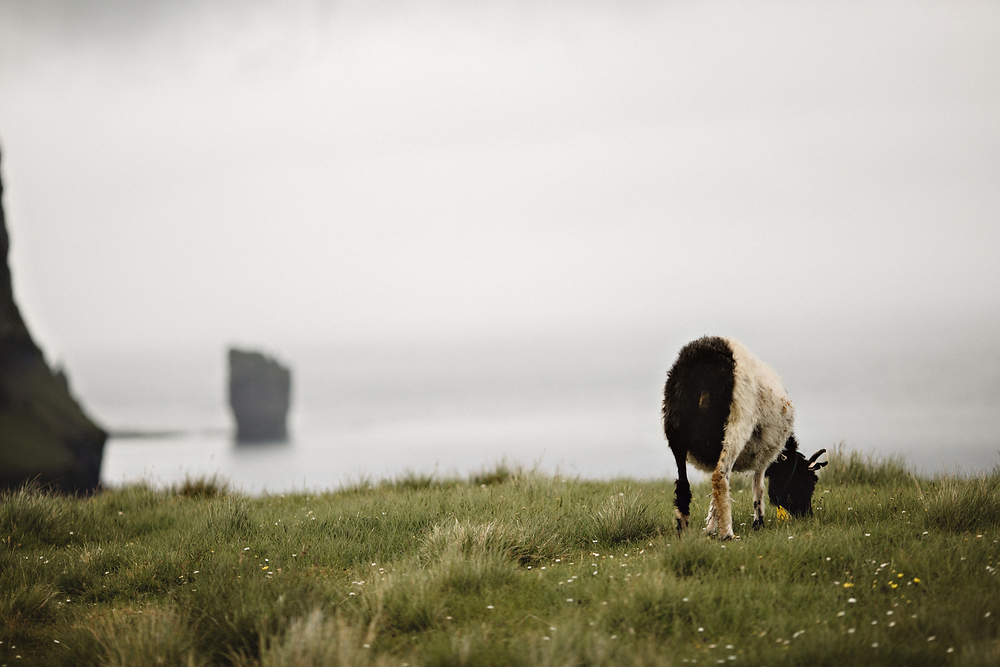 Faroe Islands Iceland Rachel Gulotta Photography-122.jpg