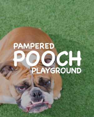 Pampered Pooch Playground by Kayd Roy