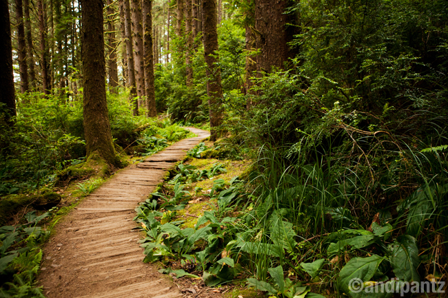 redwoods1.jpg