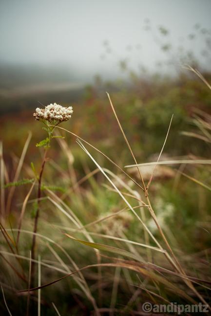 cadillacplants2.jpg