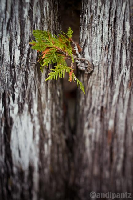 treesprig.jpg