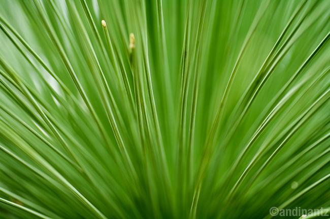 succulent5.jpg
