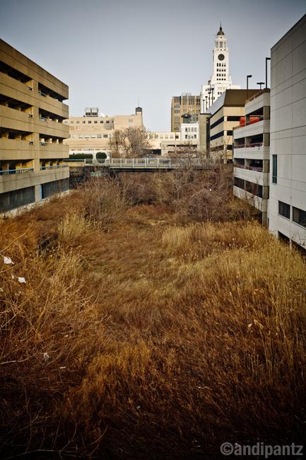 paavegrass.jpg