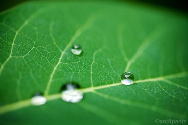 waterdroplets.jpg