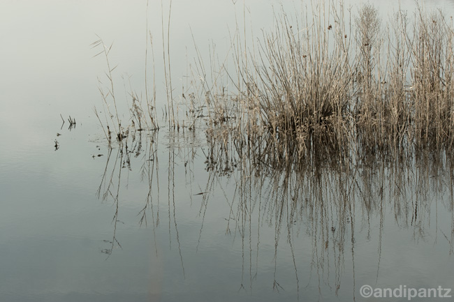 waterreeds.jpg