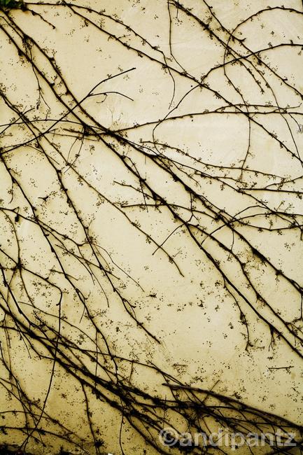 oldbranchgrowth1.jpg
