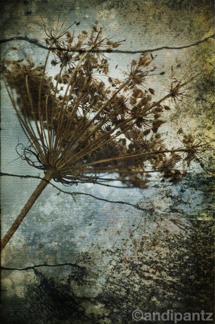 brokenflower.jpg