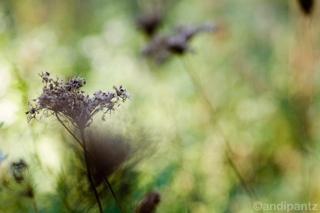 tinicumplants6.jpg
