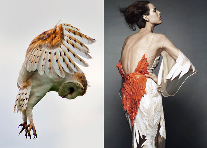 Mini Moodboard: Plumage. owl and woman