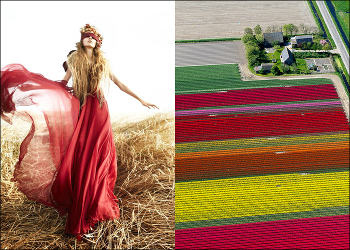 MINI MOOD BOARD: FIELD OF DREAMS. A heady mix of fashion photography from Caroline Knopf and Normann Szkop's Dutch tulip fields.