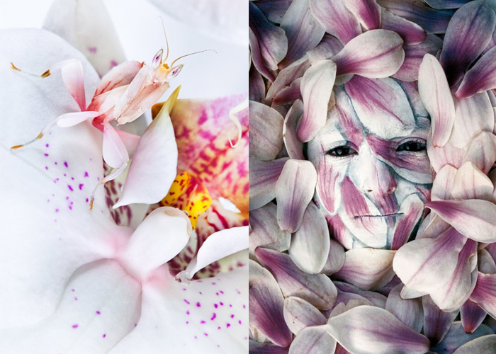MINI MOOD BOARD: CAMOUFLAGE. Artist Johannes Stötter and the Malaysian Orchid Mantis