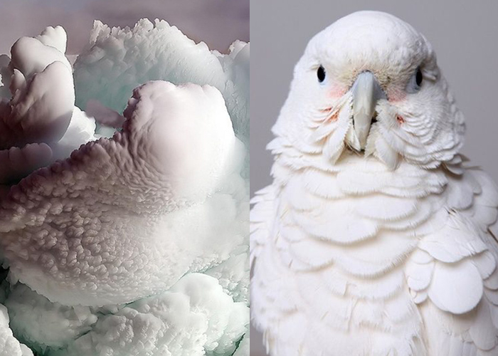 MINI MOOD BOARD: PLUMES. Billowing clouds of ice paired with feathered friends by Leila Jeffreys
