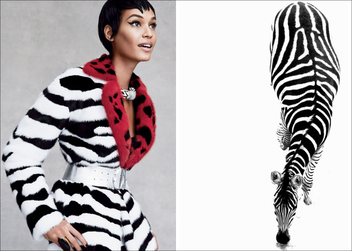MINI MOOD BOARD: BLACK & WHITE. Palette cleansing zebra prints in fashion and nature