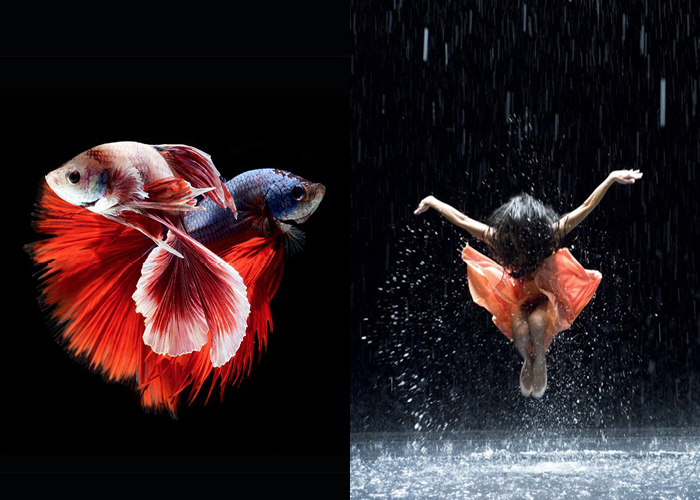 MINI MOOD BOARD: FLOAT. Featuring photo by Visarute Angkatavanich and image from Pina by Wim Wenders. #nancyherrmann