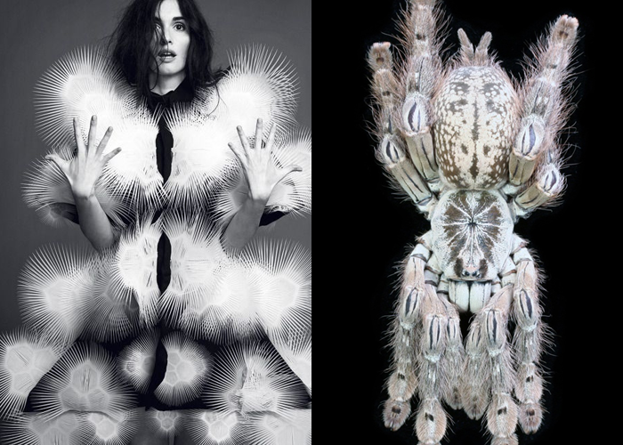 MINI MOOD BOARD: BRISTLE. Featuring Iris Van Herpen couture photographed by Nico Bustos and tarantula by Bastian Rast. #nancyherrmann