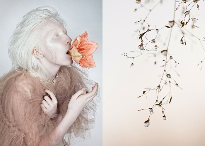 MINI MOOD BOARD: REBORN. Photos by Danil Golovkin and Teuni Stevens. #nancyherrmann #moodboard #reborn