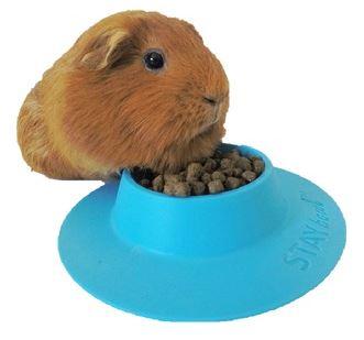3D printed pet bowl