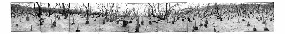 John O'Neil  Ironbark Basin  Photograph 61x300cms (unframed $2,750)