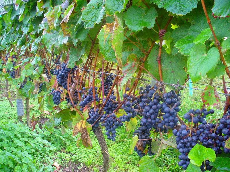wineries 1.jpg