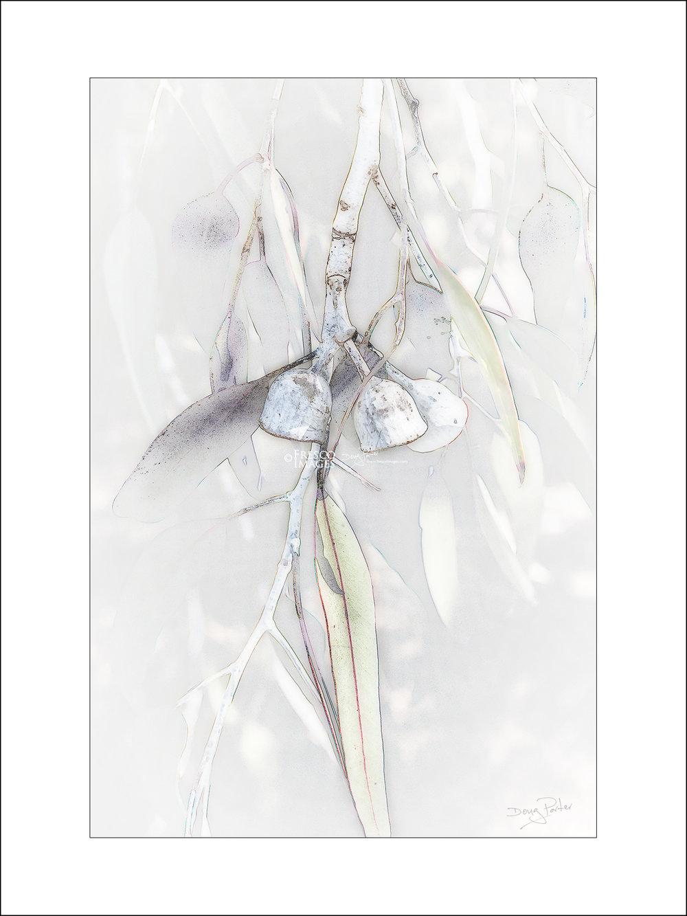 'Silver Princess'