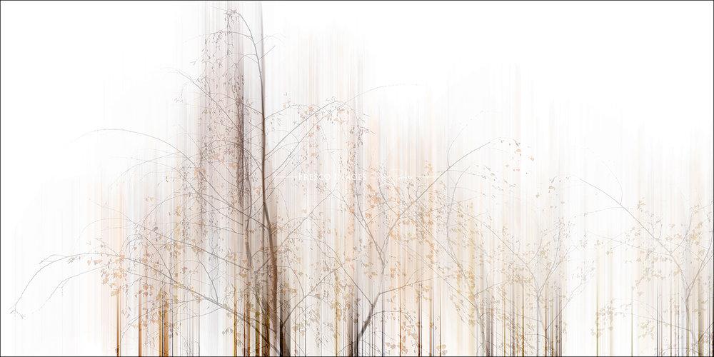 'Birch in Autumn'