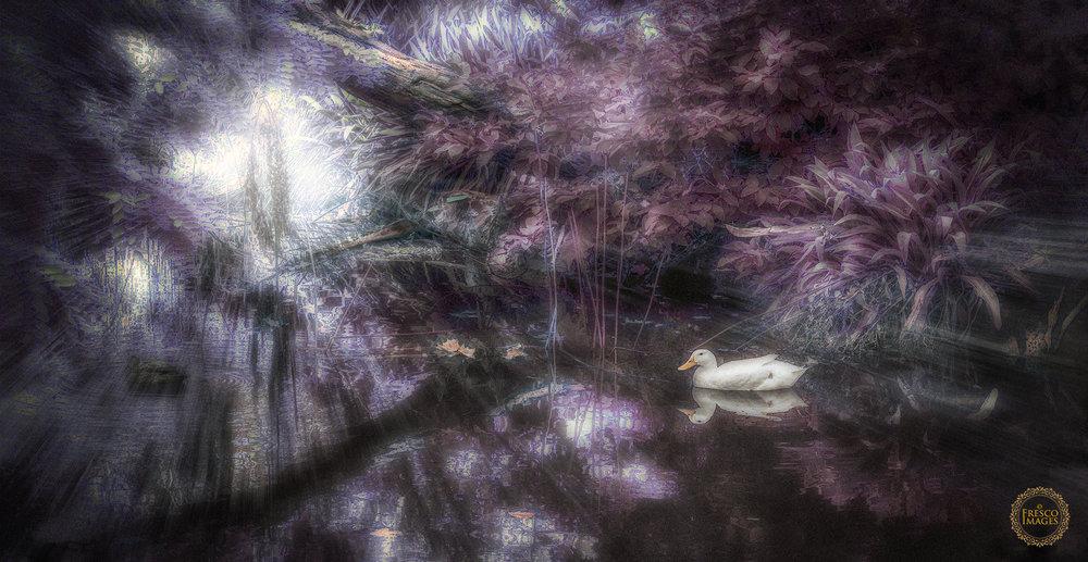 'Duckpond Dreamscape'