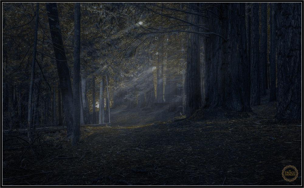 Warburton Woods
