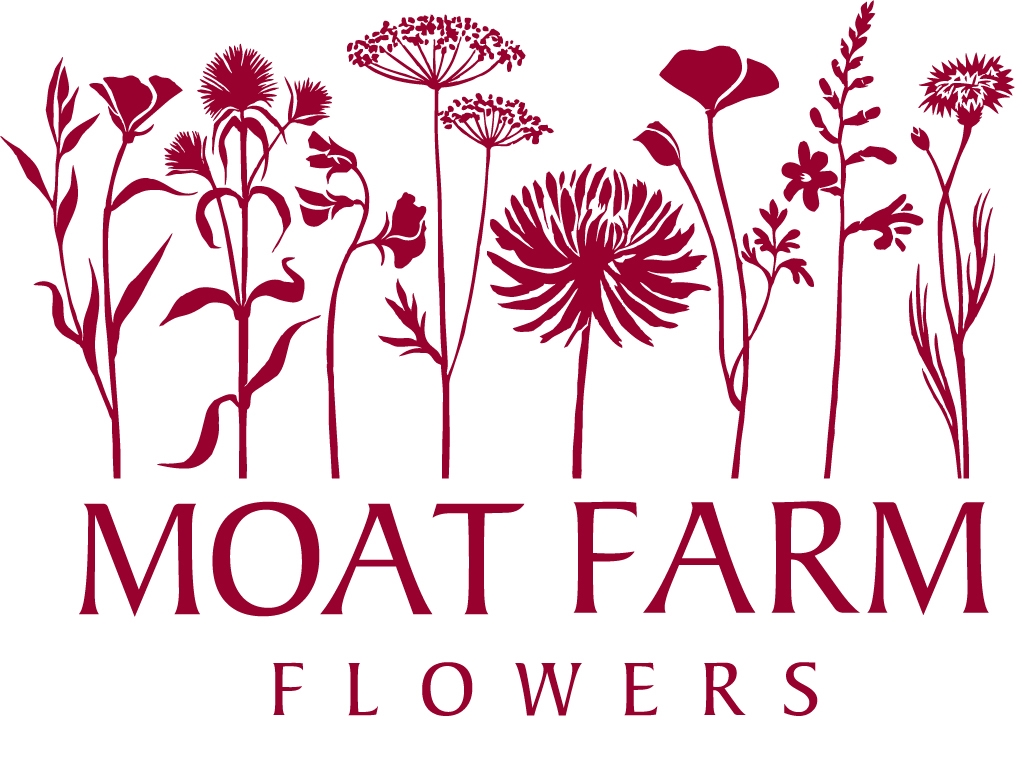 Moat Farm Flowers: a flower farm in Suffolk