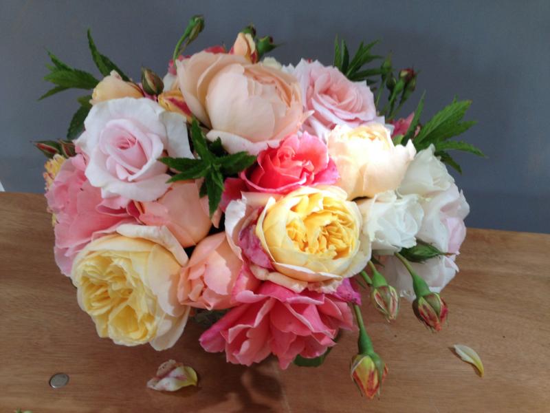 roses, June 2015