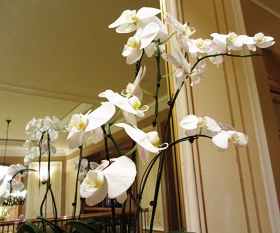Displays of orchids in different colors and shapes made me smile as I strolled along the corridors.