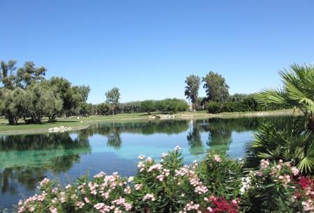 pond w 450pflowrs.JPG