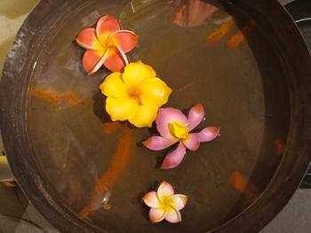 frangi bowl 350pyellow.JPG