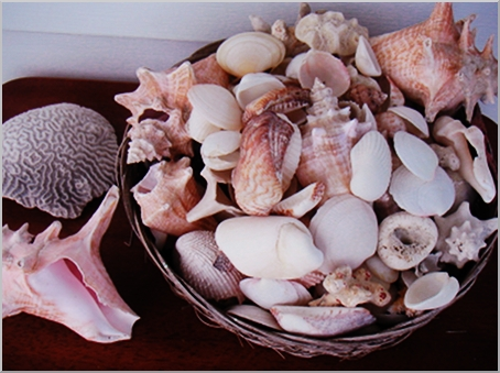 Some shells I collected. Sweet memories.