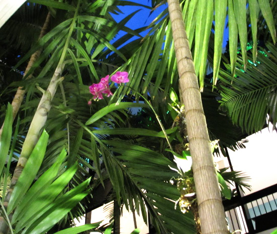 Pink orchids in the palms at The Shops at Bal Harbour, just tropical.