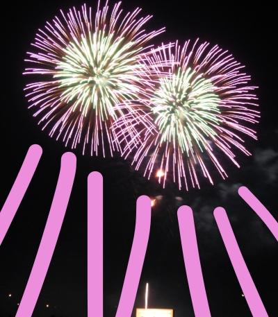 purple firework blooms.jpg
