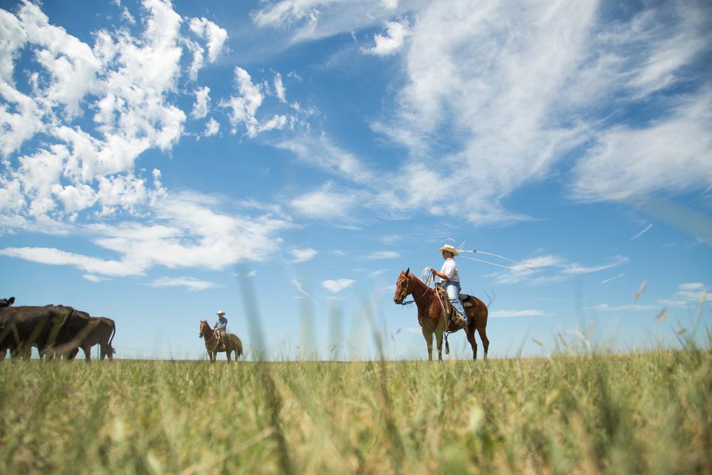 Kourt on the Prairie.jpg