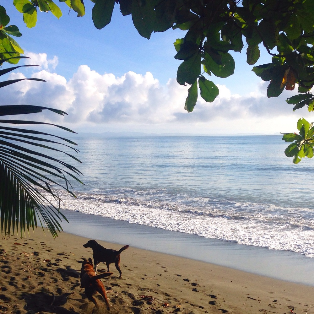 While Yogi Aaron was away I took Rama and Pete out for their morning and afternoon beach walks. It is such a beautiful experience and truly calming. Until, of course, Pete decides to playfully knock me over in the water and Rama runs into the jungle, chasing the sound of a passing moto.