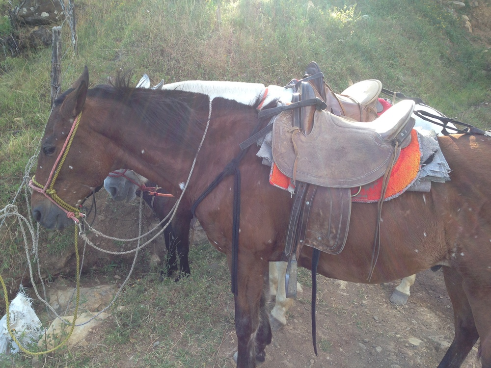 horesback-riding-monteverde