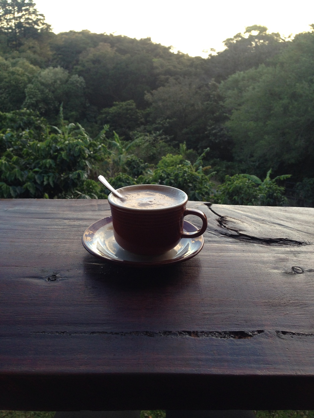 monteverde-coffee-tour