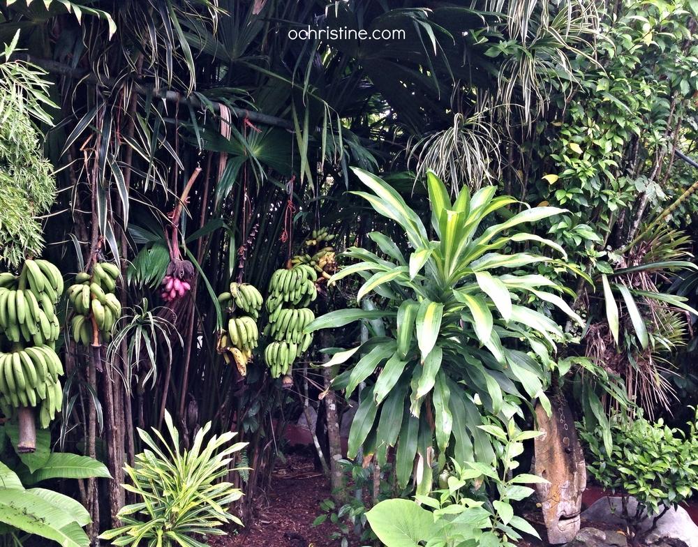best-eco-hotel-costa-rica-puerto-viejo