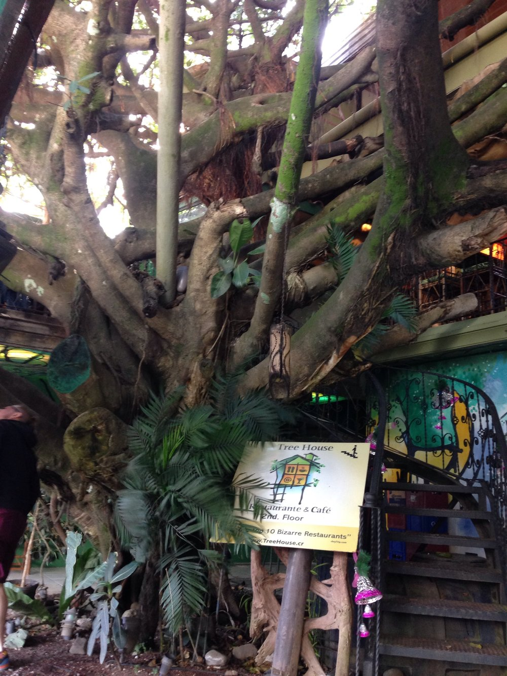 treehouse-cafe-monteverde