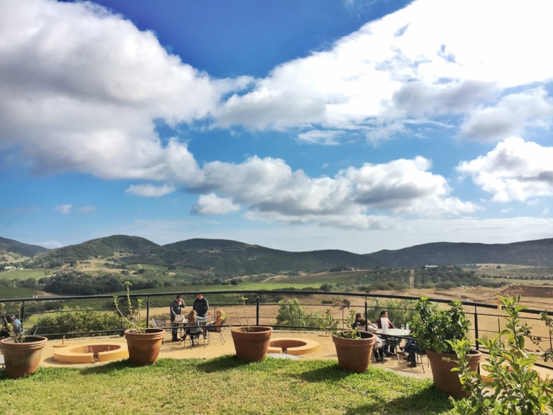 valle-de-guadalupe-mexico-wine-tasting