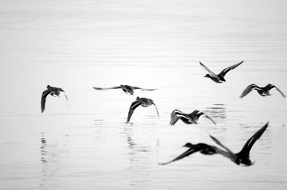 seagull-86276_1920.jpg
