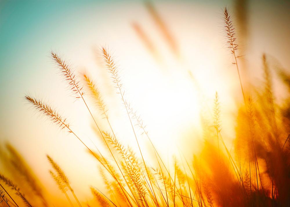 wheat_grass_04_(ss-2).jpg