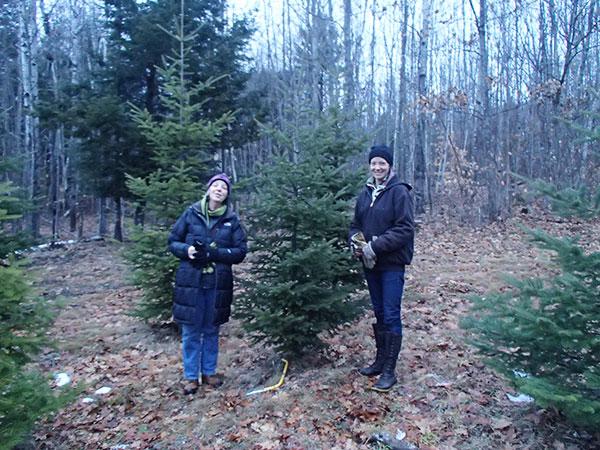 Cutting our own christmas tree - December 23, 2014