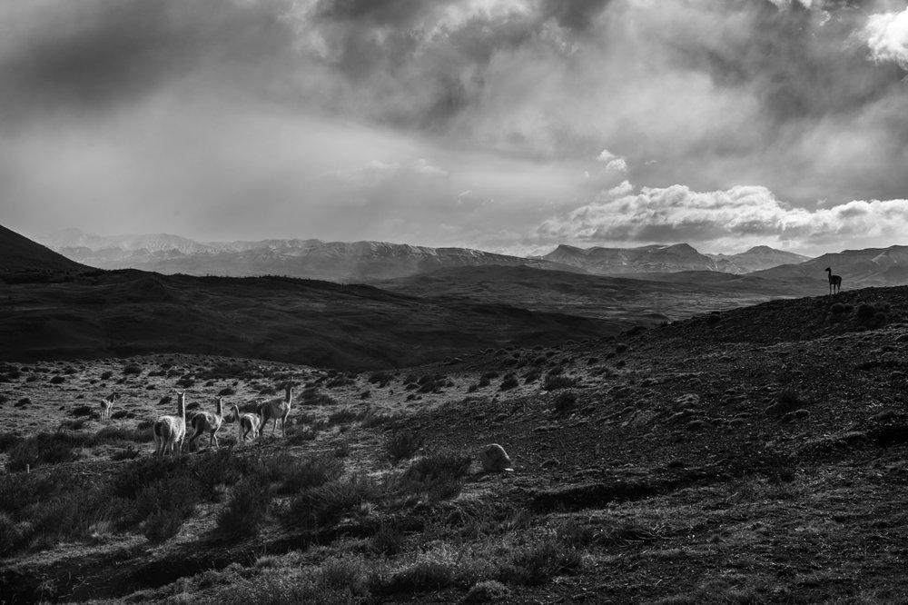 Patagonia 2015-9831.jpg
