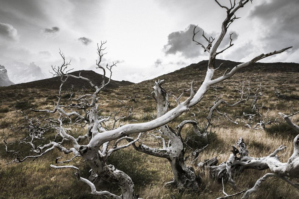 Patagonia 2015-9644.jpg