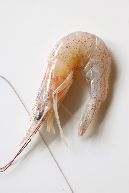http://cookalmostanything.blogspot.com/2008/03/school-prawns.html